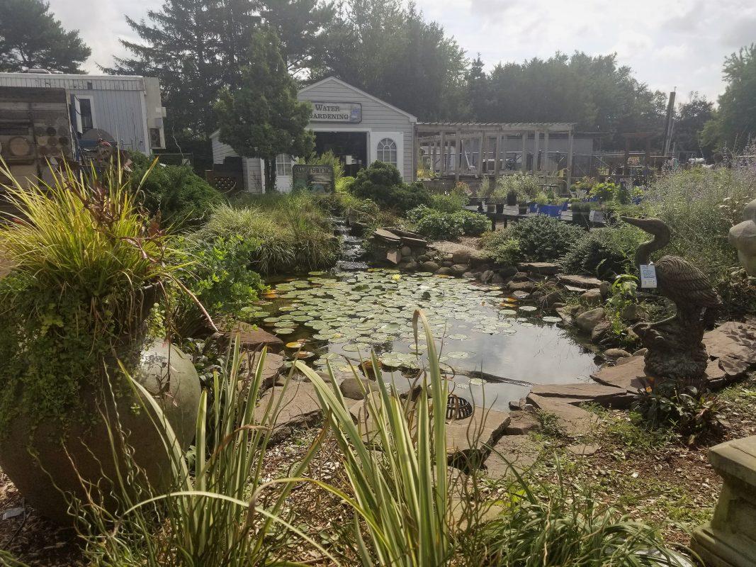 Pond   Bloomers Home U0026 Garden Center